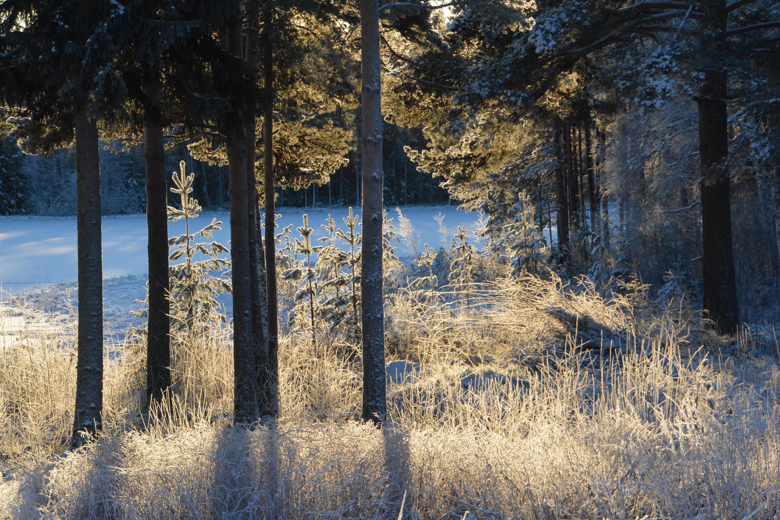 vinter_lapptjarn